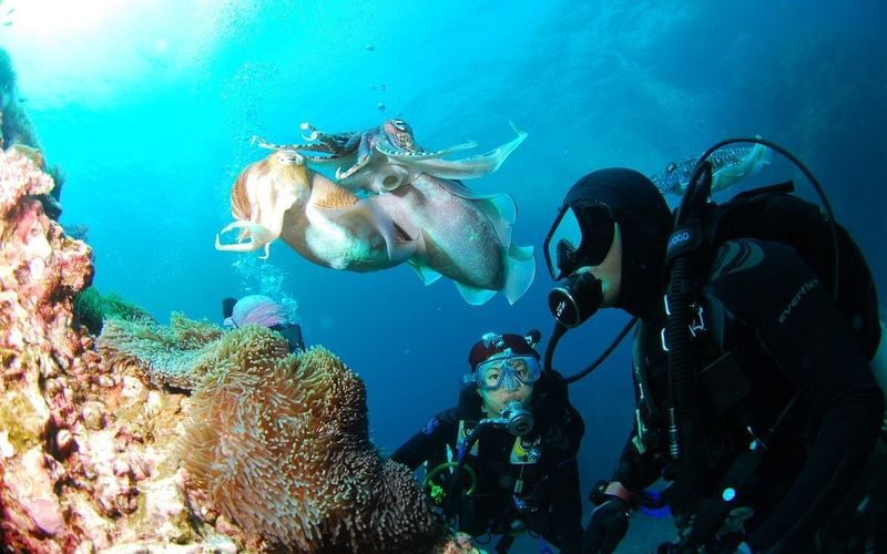 Best places to dive in Greece