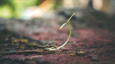 """Πως να γίνετε ο """"κηπουρός""""του νου σας!"""